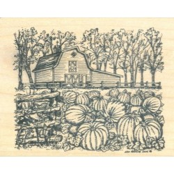 Barn & Pumpkin Patch