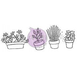 Potted Plants & Herbs